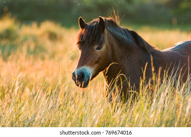 a horse is walking happily trough the high grass