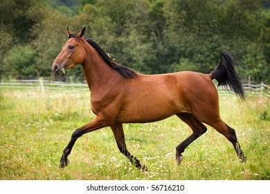 Horse walking on grass field