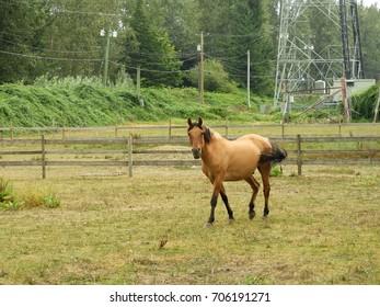 Horse walking toward camera