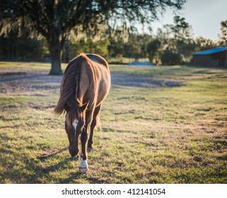Horse wandering over to say hello.