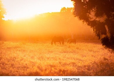 Horse in the warm sunlight of the sunset on a remote cattle station in Northern Territory, Australia