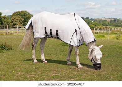 Horse wearing a grazing muzzle to prevent him from becoming ill with laminitis & overweight