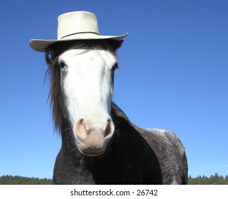 Horse wearing straw hat
