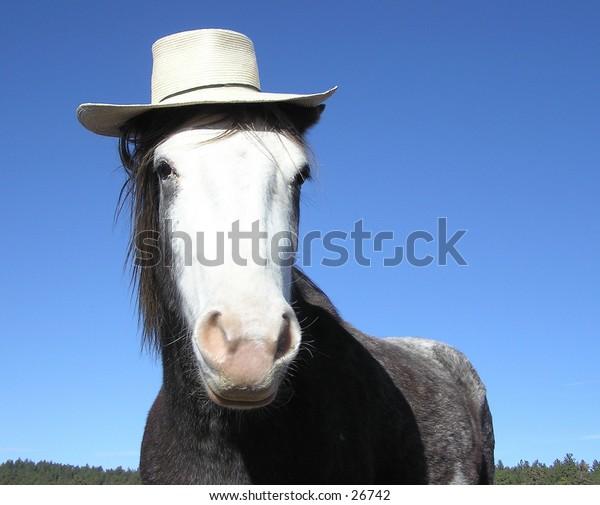 Horse wearing straw hat