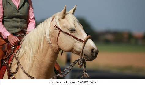 Horse western palomino in portraits with rider, horse looks to the left.
