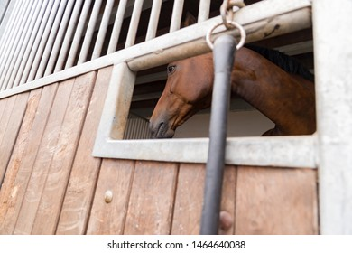 A horse (Westphalian) in the horse box. View from outside through the feed hatch.