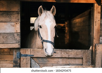 Horse with a white stripe in the stable. High quality photo
