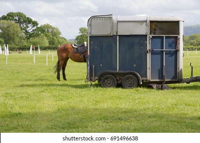 Horse wining at the trailer at equestrian event in English countryside..