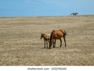 Horse with young colt with wind blow tree in background