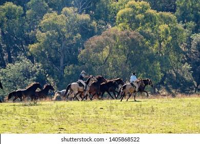 Horseback riders herding galloping wild horses in a stunningly beautiful Australian landscape - Shutterstock ID 1405868522
