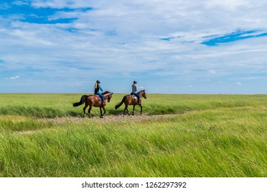 Horseback riding in the salt marshes North Sea