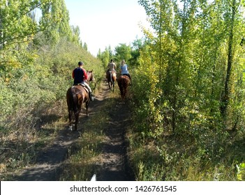 horseback riding, through the forest, on a dirt road
