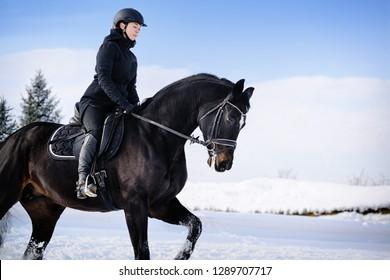 Horseback riding. Winter training