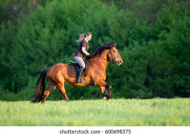 Horseback riding. Young woman is riding a horse in summertime. Girl with horse runs fast in field. Horse rider