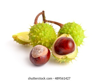 Horse-chestnut (Aesculus) fruits. Isolated on white background