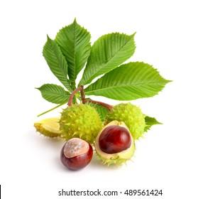 Rosskastanienfrüchte (Aesculus) mit Blättern. Einzeln auf weißem Hintergrund