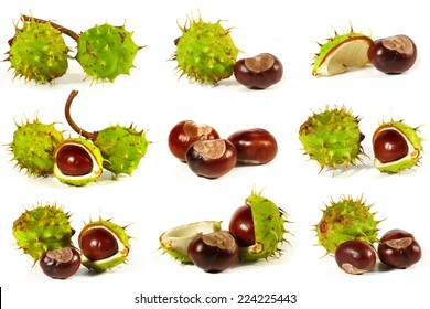 Horse-chestnut with crust on a white background. Collage