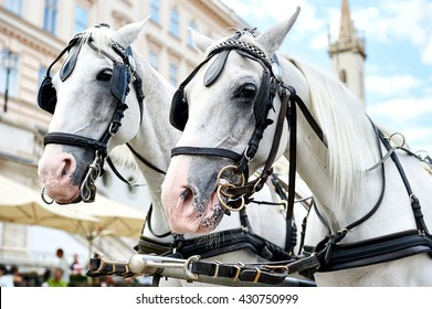 Horse-drawn carriage ( Fiacre) waiting for a tourists in the old city in Vienna, Austria