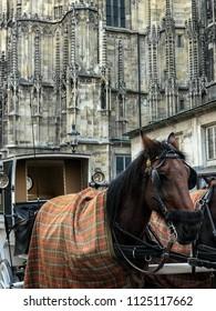 Horsedrawn carriage in Vienna, Austria