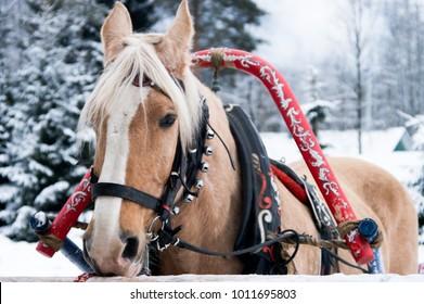 Horse-drawn sleigh. Winter in Mandrago.