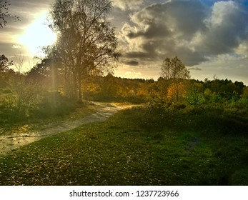 Horsell Common, Surrey / England Tue 13th.Nov 2018 at 14:43 The afternoon sun behind a Silver Birch tree on .