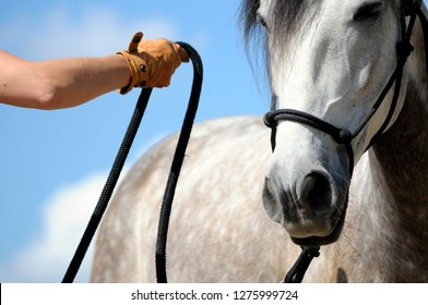 Horsemanship training with young horse