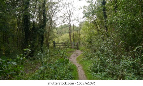 A horsepath in the Netherlands at a forest in Heemskerk