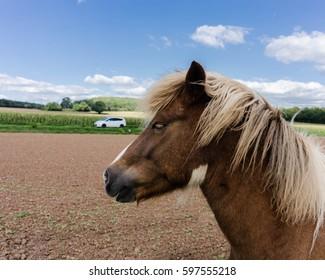 Horsepower, a Brown horse and a White car