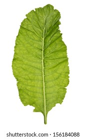 Horseradish green leaf as a spice  concept, isolated on white