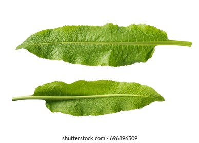 Horseradish leaves isolated on white background. Shadowless. Clipping paths. Top view