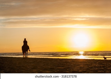 Horse-riding at the beach on sunset background. Multicolored summertime outdoors horizontal image.