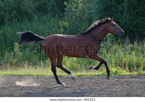 Horses 67