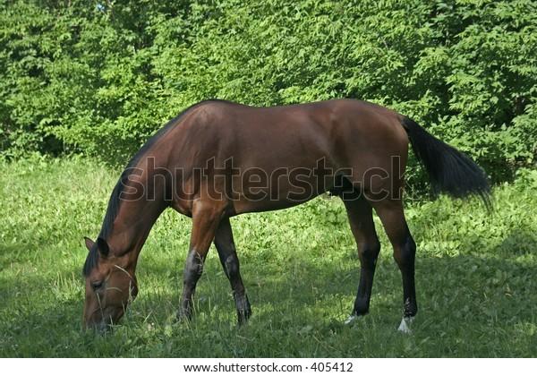 Horses 68