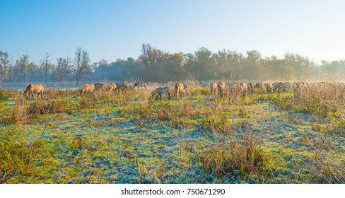Horses along the edge of a foggy pond at sunrise in autumn