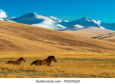 Horses in the Assy Plateau, near Almaty, Kazakhstan