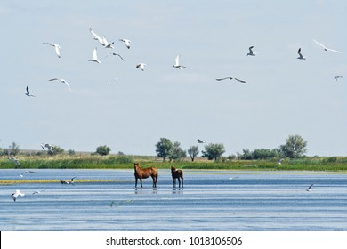 Horses in the Astrakhan steppes