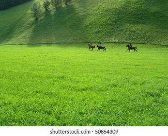 Horses in the Aurina valley (South Tyrol)