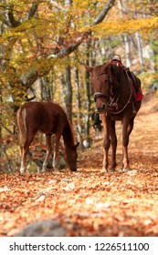 Horses in the autumn forest