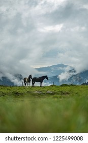 Horses in awesome nature