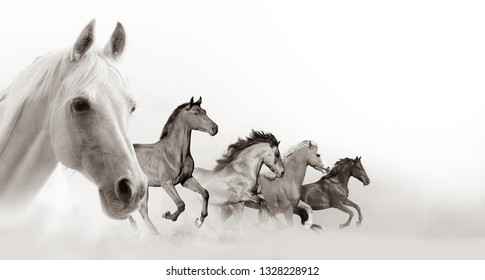 Horses banner with white background space