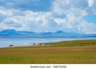 Horses and beautiful landscapes by Song Kul lake, Kyrgyzstan