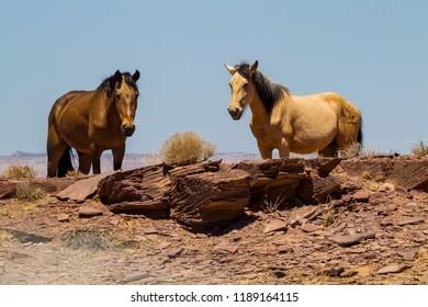 Horses at Canyon de Chelly, Arizona