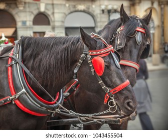 Horses and carriage, Prague