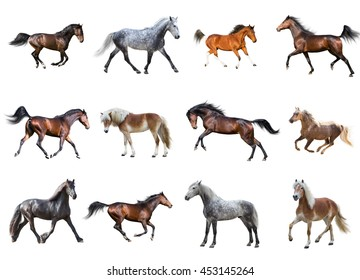 Horses collection isolated on the white background