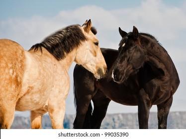 horses communicating