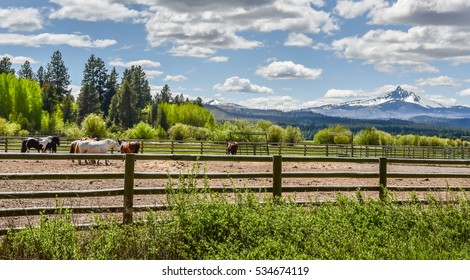 Horses in the corral on Black Butte Ranch in Central Oregon.