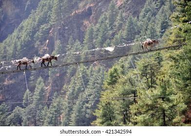 Horses crossing a suspension bridge in Everest Region (Sagarmatha National Park - Himalaya), Nepal.