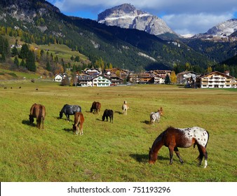 Horses in the Dolomites, Italy, Europe