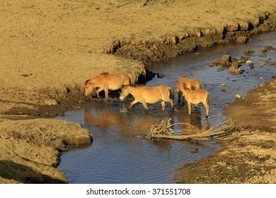 horses drink water on river near green meadow in summer