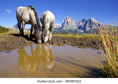 Horses drinking water under Dolomites. Famous Alp de Siusi hills in background. Original wallpaper from nature